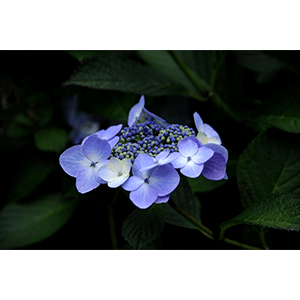 Connemara Flowers